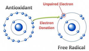 Antioxidants Explained in Human Terms